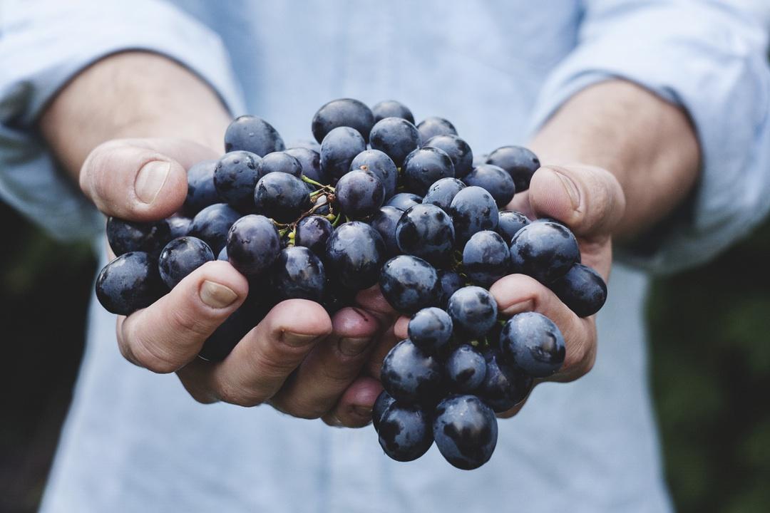 Être vigneron indépendant, cela signifie que nos vins sont produits exclusivement à partir des raisins de nos vignes, vinifiés et élevés au Domaine par nos soins.